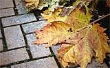 Abgestorbene Pflanzenteile laufend entfernen.