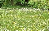 Erster Schnitt für Blumenwiesen.