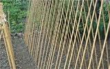 Stangen- und Buschbohnen im Freiland aussäen