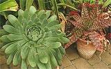 Frostempfindliche Kübelpflanzen ins Freie bringen.