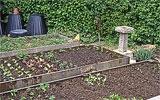 Empfindliche Pflanzen gegen Schnecken schützen.