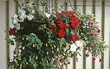 Hängekörbe und Fensterkästen bepflanzen.