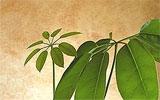 Zimmerpflanzen abstauben / besprühen.