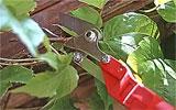 Kletterpflanzen schneiden / anbinden.
