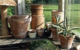 Kübelpflanzen für den Winter einquartieren.