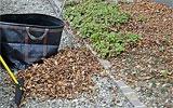 Liegengelassenes Herbstlaub aus Staudenbeete entfernen.