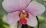 Orchideen ab jetzt düngen.