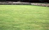Rasen düngen und vertikutieren.
