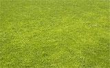 Rasen nachdüngen.