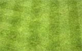 Rasen regelmäßig mähen.