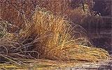 Abgestorbene Pflanzenteile aus dem Teich entfernen.
