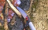 Abgestorbene Äste an Bäumen entfernen.