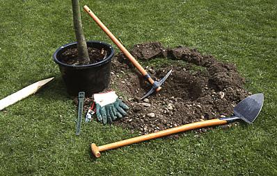 Gehölze pflanzen oder umsetzen.