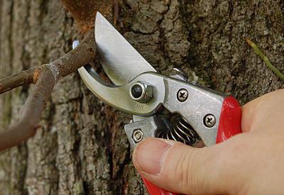 ARS-Baumscheren