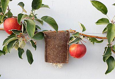Ohrwurm-Taschen