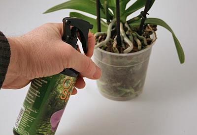 Orchideen-Spray