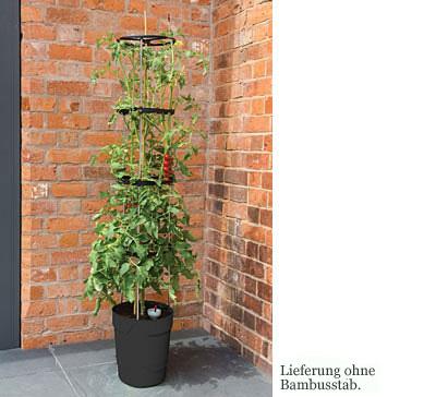 Tomaten-Turm