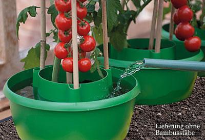 Tomatenringe