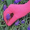 Foxgloves, Pink