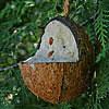Kokosnuss-Futterstelle