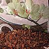 Orchideen-Substrat